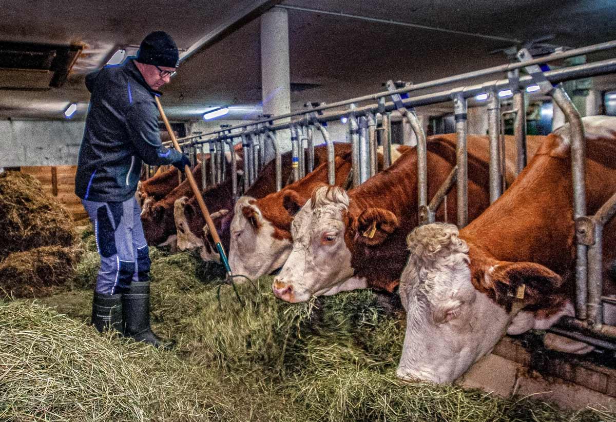 Für den Landwirt bedeutet es tägliche Arbeit, Leidenschaft und Liebe zu den Tieren