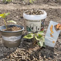 Für ein optimales Ernteergebnis beim Einpflanzen der Süßkartoffel hochwertige Gärtnererde verwenden und den Tiroler Schofwolldünger miteinarbeiten